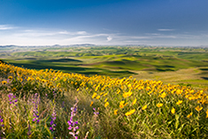 The Palouse Photo Gallery