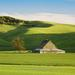 """Green Barn in Green Field, Eastern Washington"" - Click to view enlargement &/or purchase"