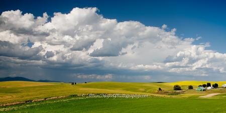 """Spring Farm, Eastern Washington"""