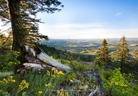"""Morning View From Moscow Mountain, Idaho"""