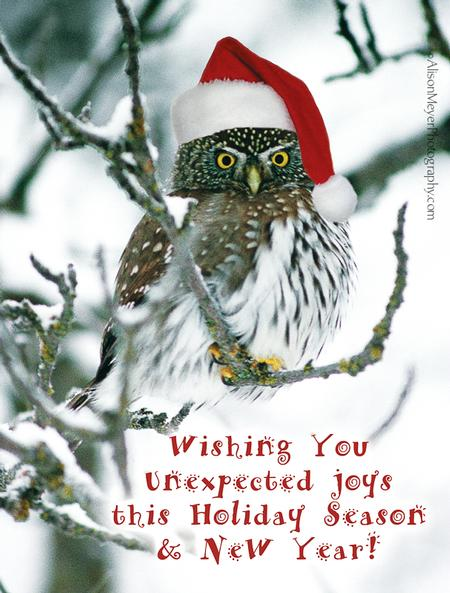 """Pygmy Owl Holiday Greeting"""