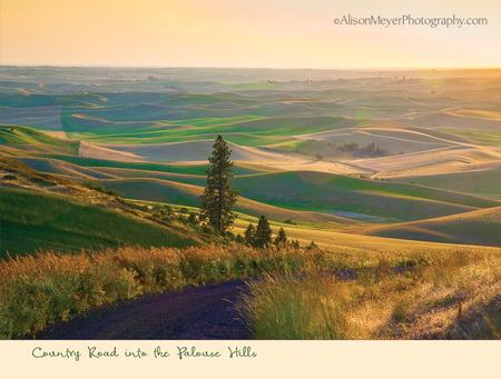 """Country Road Into the Palouse Hills"""