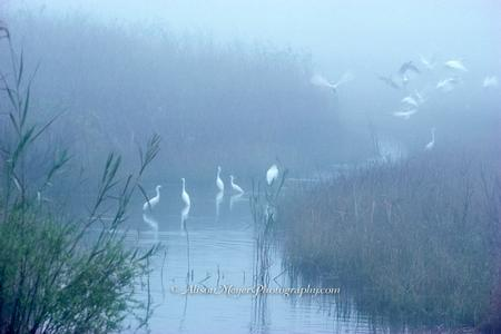 """Morning at the Rookery, Tamiami Trail, Florida"""