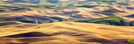 """Palouse Golden Sea"""