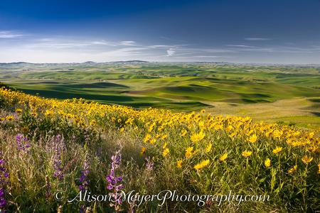 """Palouse Perfect, View Toward Moscow, Idaho"""
