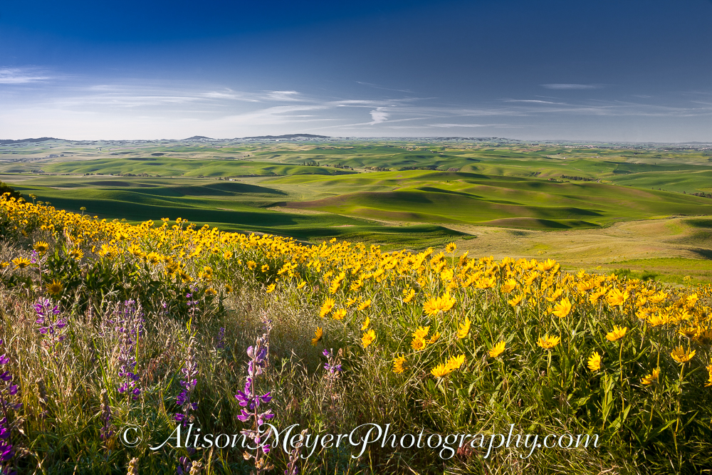 Quot Palouse Perfect View Toward Moscow Idaho Quot