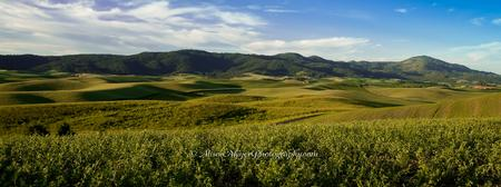 """Moscow Mountain and Palouse Hills"""